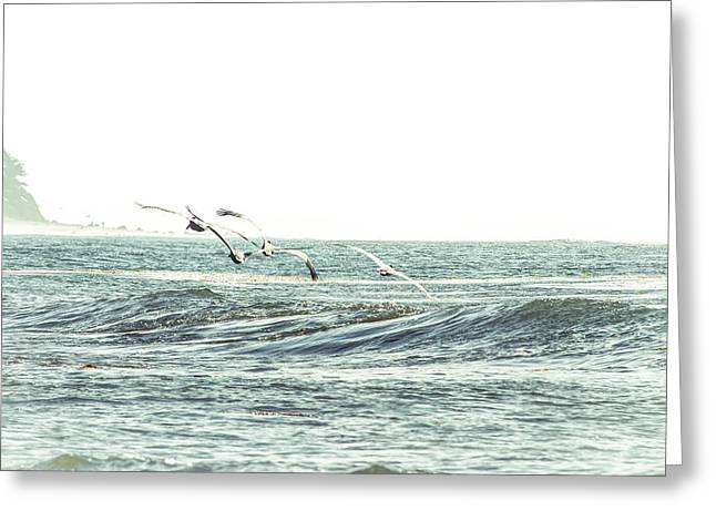 Beach In Santa Barbara Greeting Cards - Pelicans Greeting Card by Beth Taylor