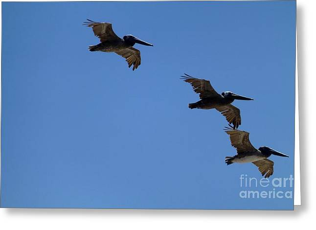Half Moon Bay Greeting Cards - Pelicans Greeting Card by Bill Wagner