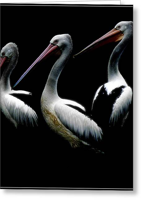 Great Birds Digital Greeting Cards - Pelicans Dark Greeting Card by Daniel Hagerman