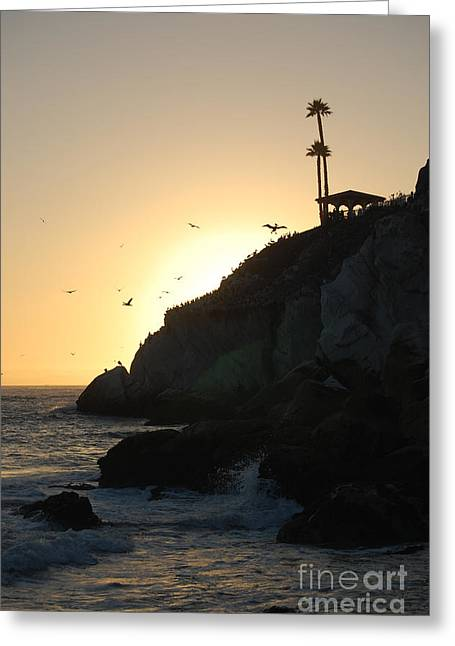 Ocean Vista Greeting Cards - Pelicans Gliding At Sunset Greeting Card by Debra Thompson