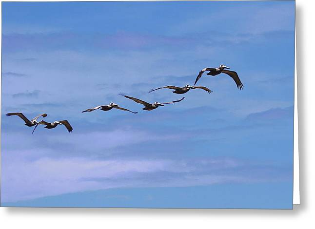 Pelican Greeting Cards - Pelicans in a Row Greeting Card by Cathy Lindsey