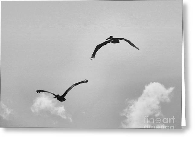 Flock Of Flying White Pelicans Greeting Cards - Pelicans in Flight III Greeting Card by Scott Cameron