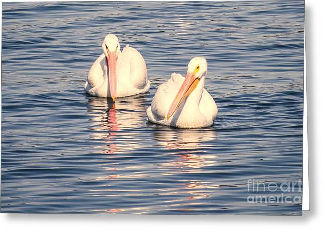 Pelican's Love Greeting Card by Zina Stromberg