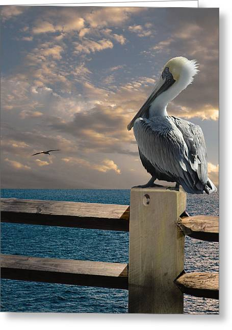 Shorebird Greeting Cards - Pelicans of Tampa Bay Greeting Card by Matthew Schwartz
