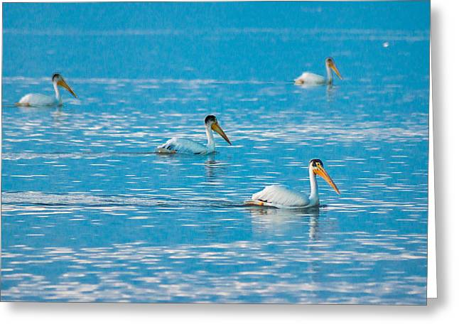 Sea Birds Greeting Cards - Pelicans On Blue Greeting Card by Bill Pevlor