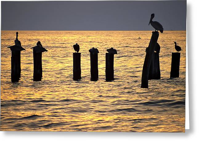 Port St Joseph Greeting Cards - Pelicans on Roost Greeting Card by Bill Chambers