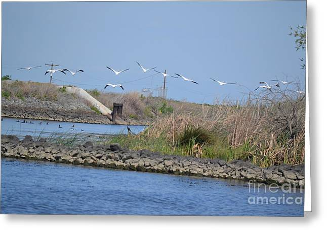 Bird Cocoon Greeting Cards - Pelicans over Levee Greeting Card by Gero