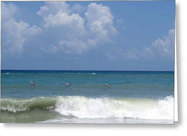 Pelican Art Greeting Cards - Pelicans over the ocean Greeting Card by Zina Stromberg