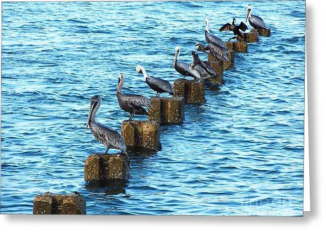 Esem8chart.com Greeting Cards - Pelicans Greeting Card by Sarah Holenstein