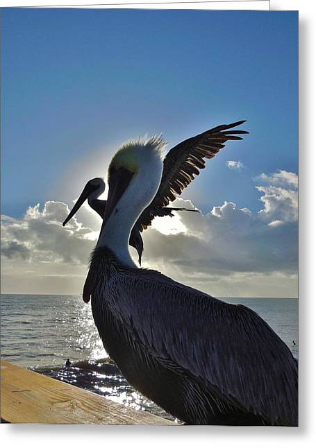 Best Sellers -  - Kite Greeting Cards - Pelicans Times Two Sunrise 2 12/4 Greeting Card by Mark Lemmon