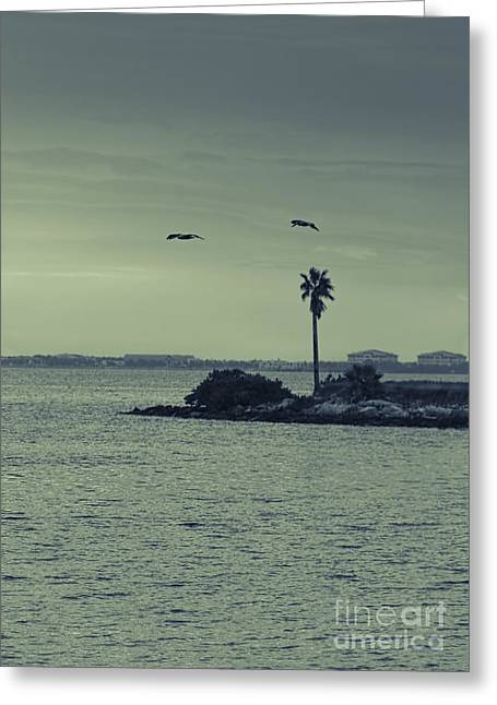 Water Fowl Photographs Greeting Cards - Pelicants and Palm Greeting Card by Marvin Spates