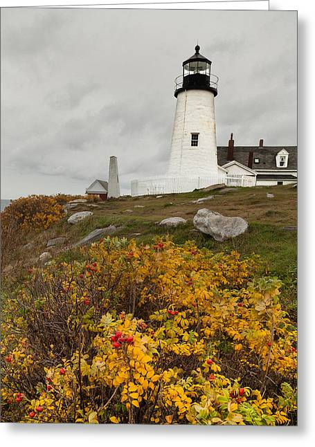 Maine Beach Greeting Cards - Pemaquid Point Lighthouse and Sea Roses Greeting Card by David Smith