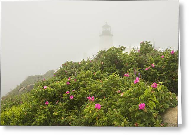 Pemaquid Point Lighthouse In Fog On The Maine Coast Greeting Card by Keith Webber Jr
