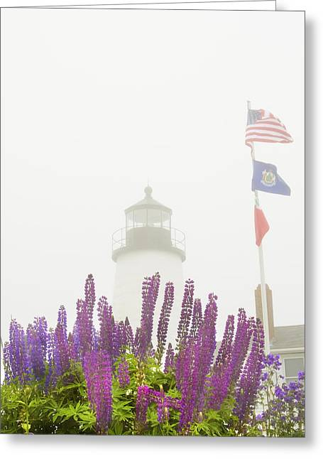 Maine Lighthouses Greeting Cards - Pemaquid Point Lighthouse Lupine Maine Prints Greeting Card by Keith Webber Jr