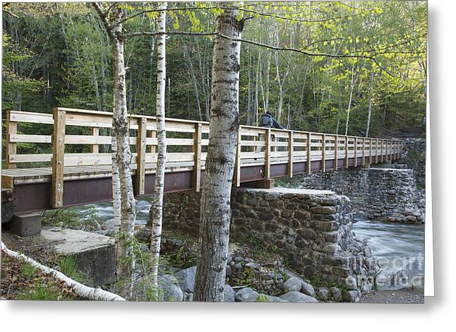 New Hampshire Logging Greeting Cards - Pemigewasset Wilderness - White Mountains New Hampshire Greeting Card by Erin Paul Donovan