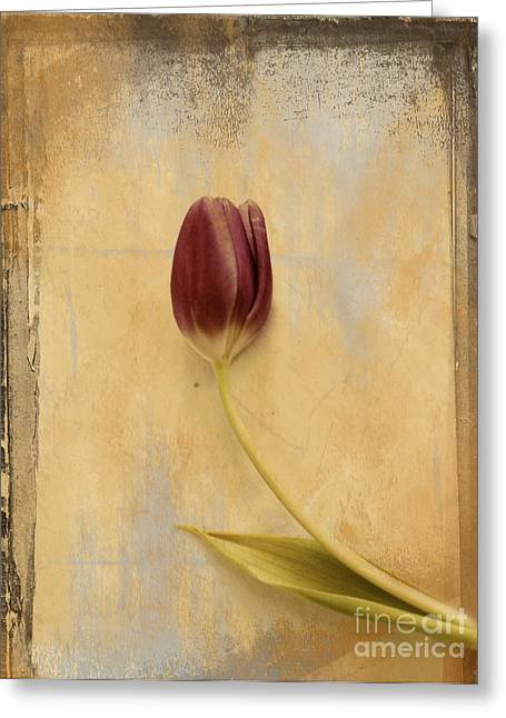 Flower Still Life Greeting Cards - Penchant Naturel 03bt03c Greeting Card by Variance Collections