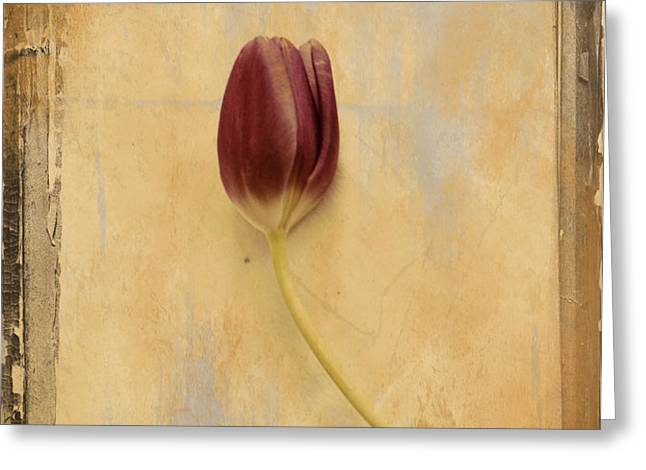 Penchant Naturel 03bt03c Greeting Card by Variance Collections