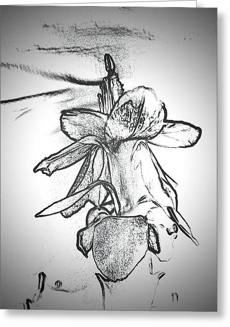 Pencil On Canvas Greeting Cards - Pencil Blossom Greeting Card by Dan Vallo