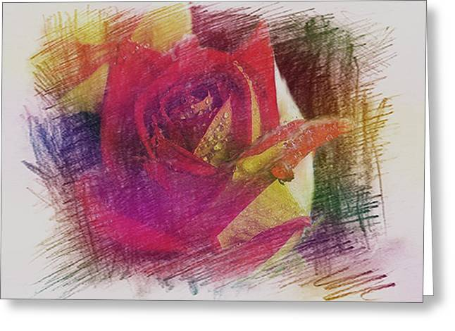 Award Winning Art Greeting Cards - Penciled Rose Sketch Greeting Card by Dennis Buckman