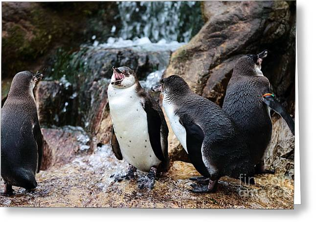 Birds Of Dreams Greeting Cards - Penguin Argument Greeting Card by John Rizzuto