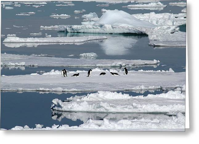 Ocean Vista Greeting Cards - Penguin Party Greeting Card by Ginny Barklow