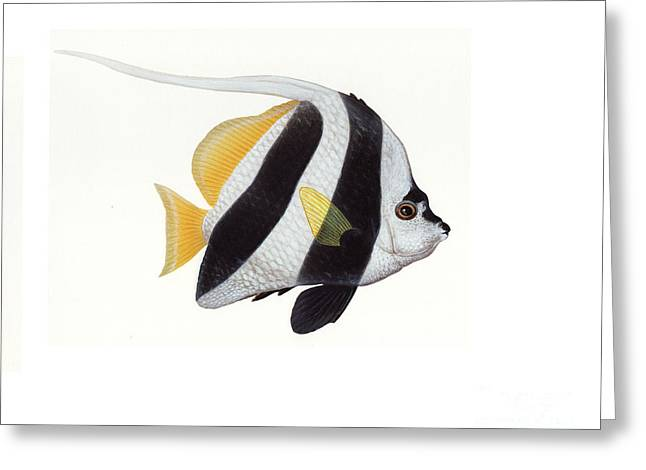 Pennant Coralfish Heniochus Acuminatus Greeting Card by Carlyn Iverson