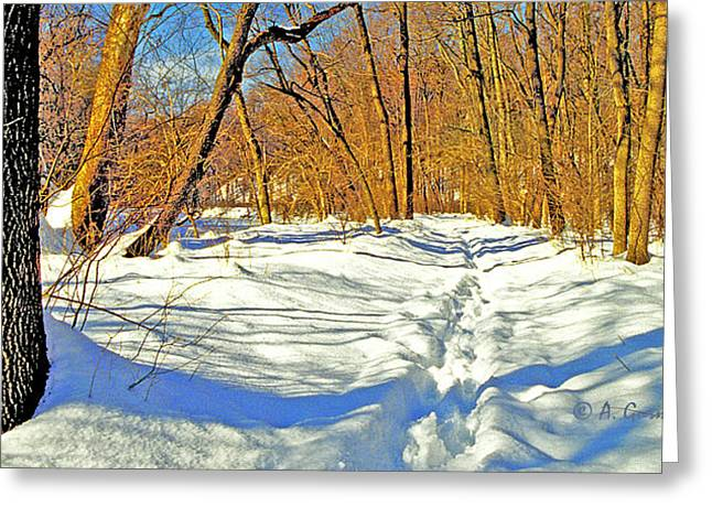 Greeting Card featuring the photograph Pennsylvania Forest In Winter by A Gurmankin