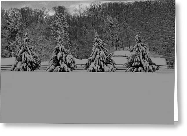 Pennsylvania Photographs Greeting Cards - Pennsylvania Snowy Wonderland BW Greeting Card by David Dehner