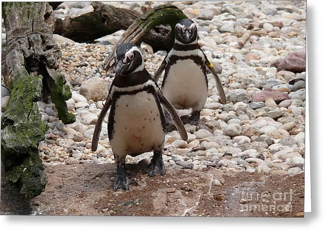 Bird Art Greeting Cards - Penguins - Slow Walk - Digital Art Greeting Card by Anthony Morretta