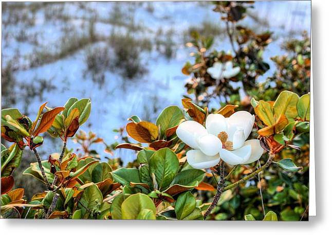 Florida Panhandle Greeting Cards - Pensacola Beach Belle  Greeting Card by JC Findley