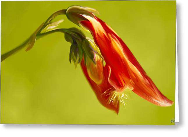 Penstemon Greeting Card by Angela A Stanton
