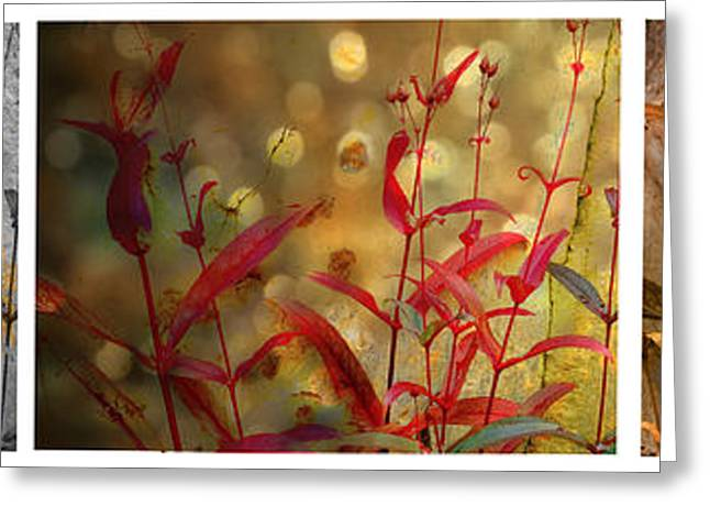 Mike Nellums Greeting Cards - Penstemon Triptych 3 Greeting Card by Mike Nellums