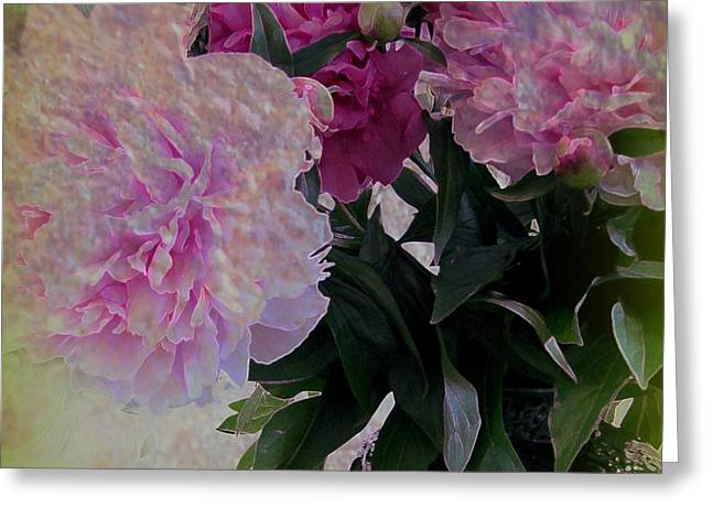 Magneta Greeting Cards - Peonies 2 Greeting Card by Shirley Sirois