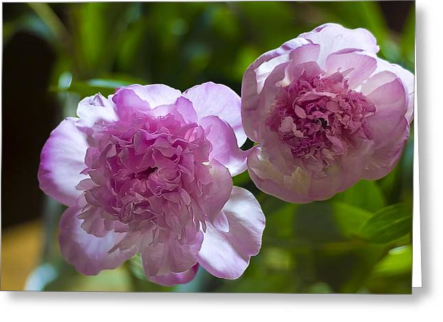 Blured Greeting Cards - Peony blossoms Greeting Card by Algirdas Gelazius