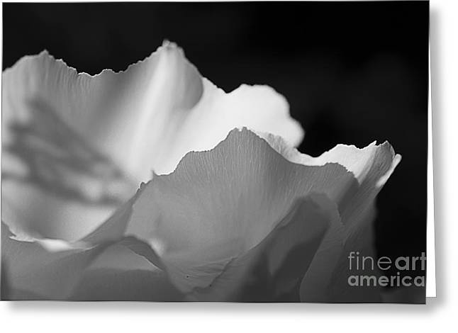 Peony Edges Greeting Card by Terry Rowe