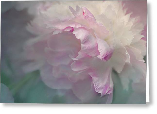 Digital Flower Greeting Cards - Peony Greeting Card by Jeff Burgess