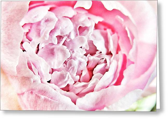 Peony Art Greeting Cards - Peony Greeting Card by Marianna Mills