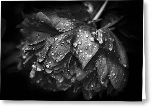 Rain Drop Greeting Cards - Refreshed Greeting Card by Jessica Jenney