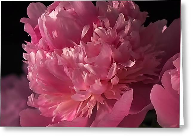 Peony Art Greeting Cards - Peony Greeting Card by Rona Black