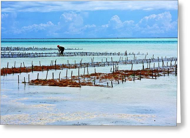 African Huts Greeting Cards - People Of The Sea - Zanzibar Island - Tanzania Greeting Card by Aidan Moran