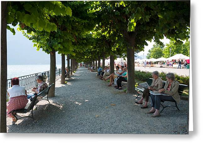 Treelined Greeting Cards - People Sitting On Benches Among Trees Greeting Card by Panoramic Images