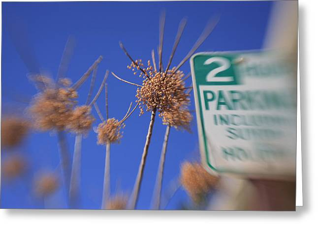 Depth Of Field Greeting Cards - Pepper Parking Greeting Card by Scott Campbell