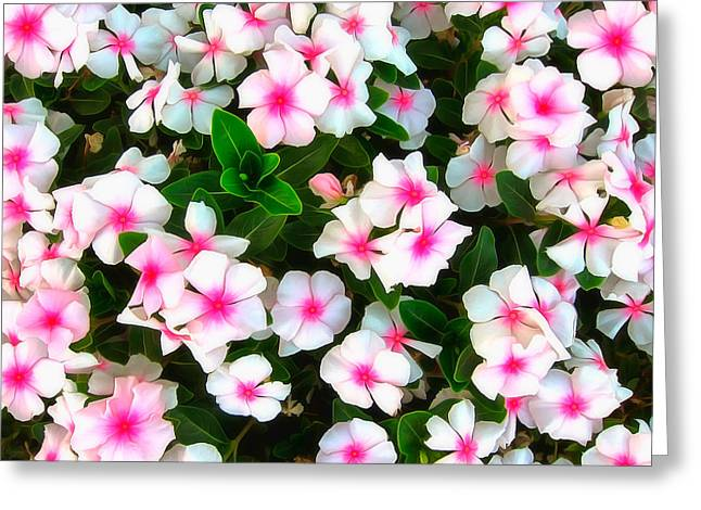 Floral Pictures Greeting Cards - Peppermint In The Garden Greeting Card by Bernie  Lee