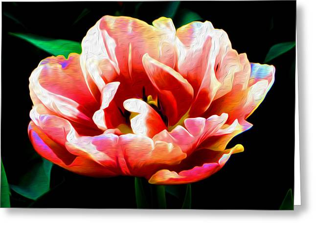 Recently Sold -  - Floral Digital Art Greeting Cards - Peppermint Tulip Painting Greeting Card by Ursa Davis