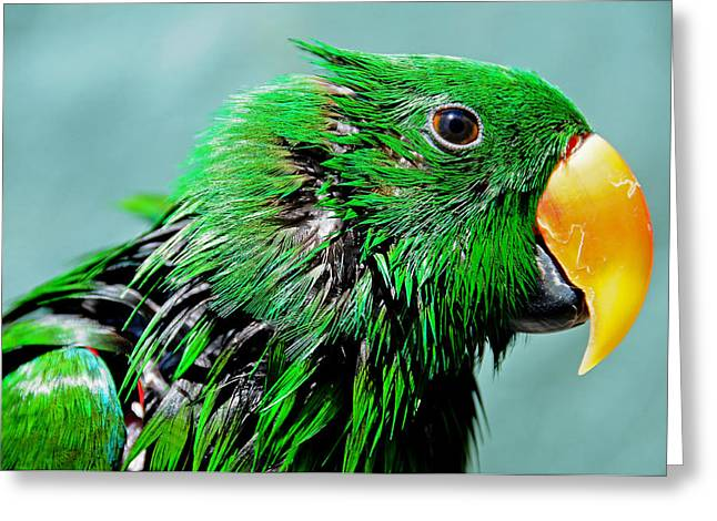 Yellow Beak Greeting Cards - Peppi. Green Parrot After Washing Greeting Card by Jenny Rainbow