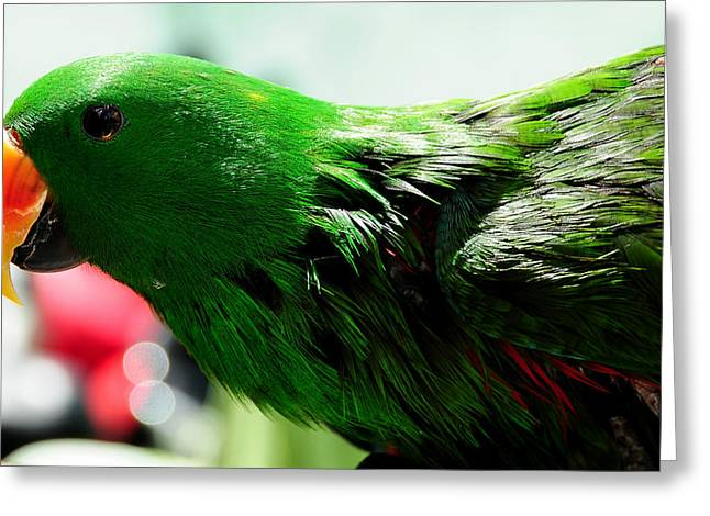 Yellow Beak Greeting Cards - Peppi.Green Parrot in his Glory Greeting Card by Jenny Rainbow