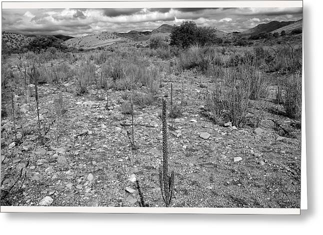 Prospect Place Greeting Cards - Percha Dry-bed Creek New Mexico              Greeting Card by Mark Goebel