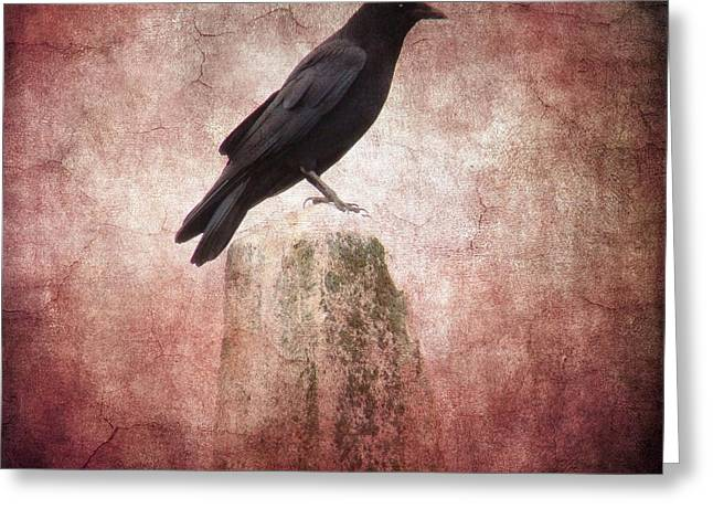Photographs With Red. Greeting Cards - Perched Crow Greeting Card by Gothicolors Donna Snyder
