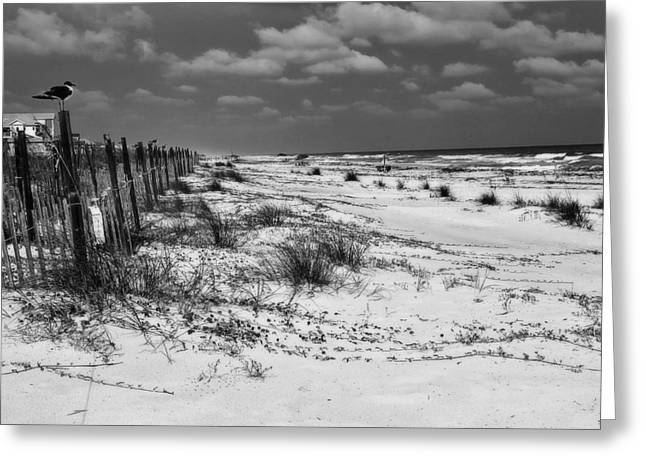 St. George Island Greeting Cards - Perched II  Greeting Card by Toni Hopper