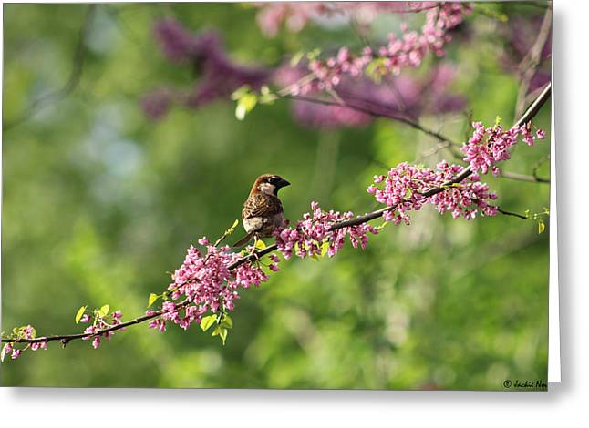 Red Bud Trees Greeting Cards - Perched Greeting Card by Jackie Novak